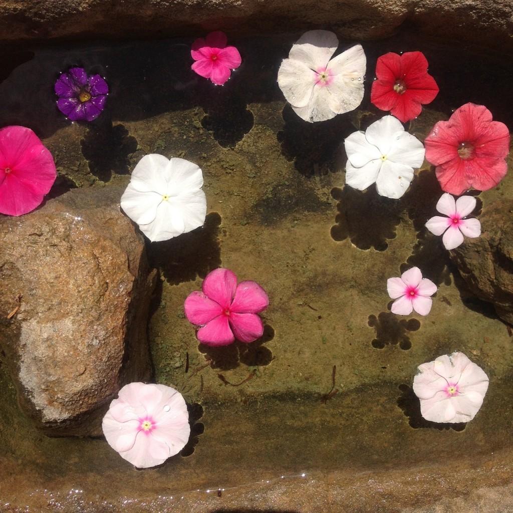 zenspiration blomsterhoveder i vand